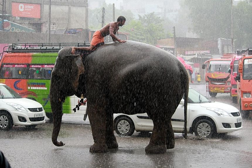 An Indian mahout sitting on an elephant amid heavy rainfall in Jammu, Kashmir, yesterday. The city's traffic slowed to a crawl as floods spread.