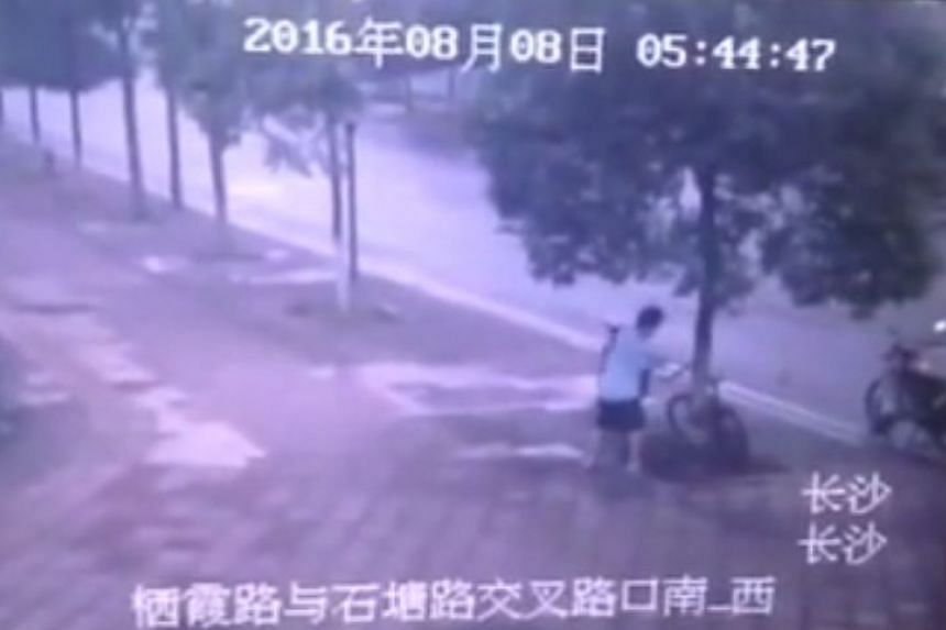 A video shows a Chinese man sawing a tree so as to get to a bicycle padlocked to it.
