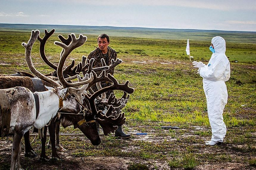 An undated picture released by the Russian Emergency Ministry on Monday shows a veterinarian checking on reindeer outside Yar-Sale town in the Yamal peninsula. A recent anthrax outbreak in Russia's far north has left a child dead and 23 people infect