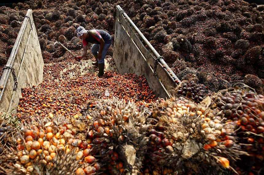 A worker unloads a truck of harvested oil palm fruit, in Kertajaya, Indonesia. Palm oil producer Golden Agri-Resources was hit by low plantation output due to El Nino.