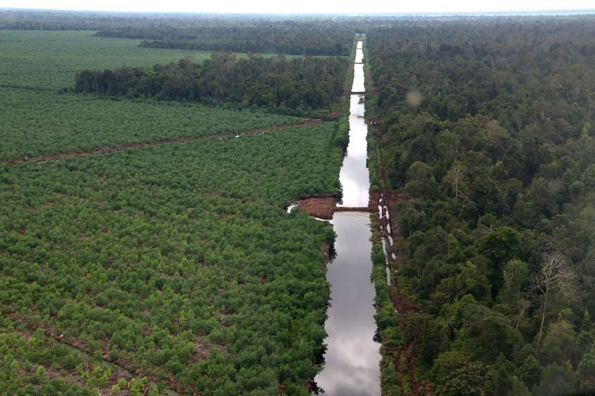 Canal blocking in the Kerumutan province of Riau to increase water levels in Asia Pulp & Paper (APP) suppliers' concession plots located on peatlands and as a fire risk reduction measure.