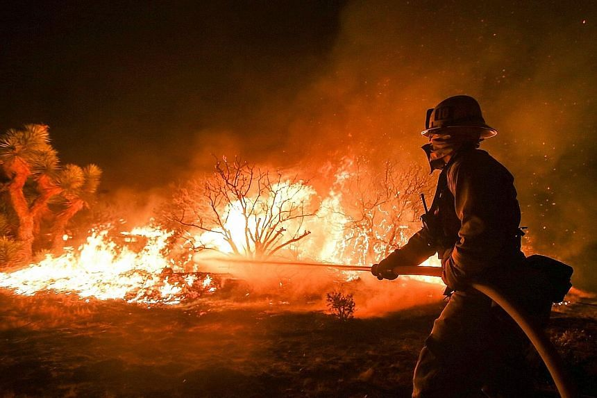 A firefighter battling the Blue Cut wildfire near Cajon Pass, north of San Bernardino, California, on Tuesday. A record five-year drought and a sizzling heatwave in California are fanning wildfires in the state.