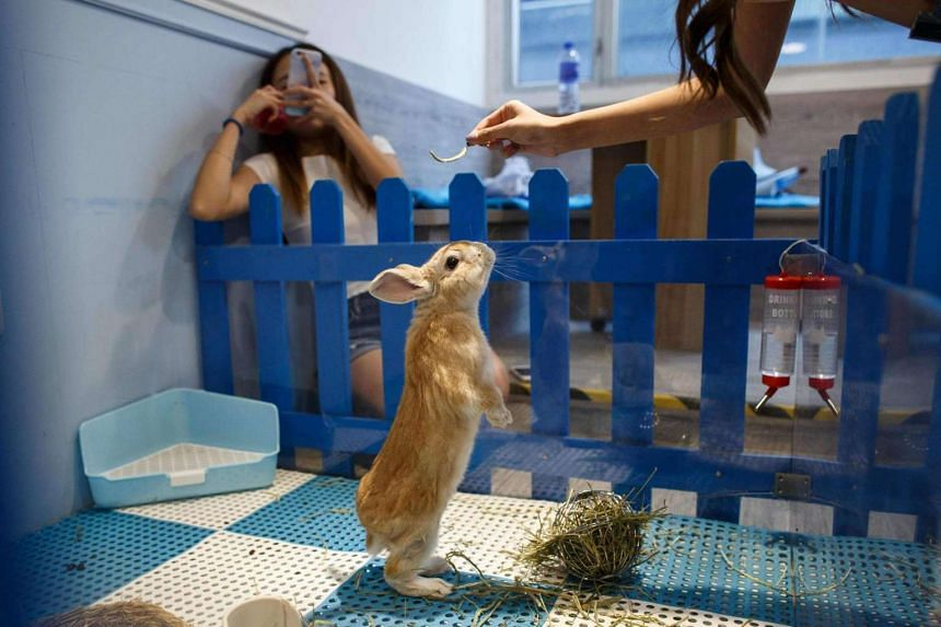 """A customer takes a photo as her friend offers food to a rabbit standing on its hind legs at the """"Rabbitland"""" cafe in the district of Causeway Bay in Hong Kong."""