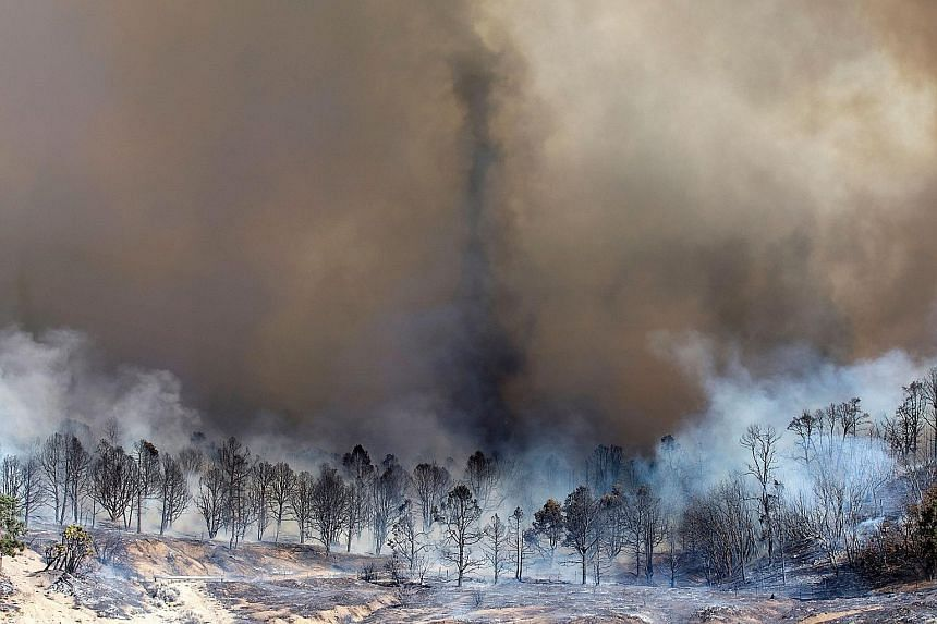 """Smoke rising from a burnt-out grove of trees in Wrightwood, California, on Wednesday. The blaze was so ferocious that it generated tornado-like flaming vortexes known as """"firenadoes""""."""