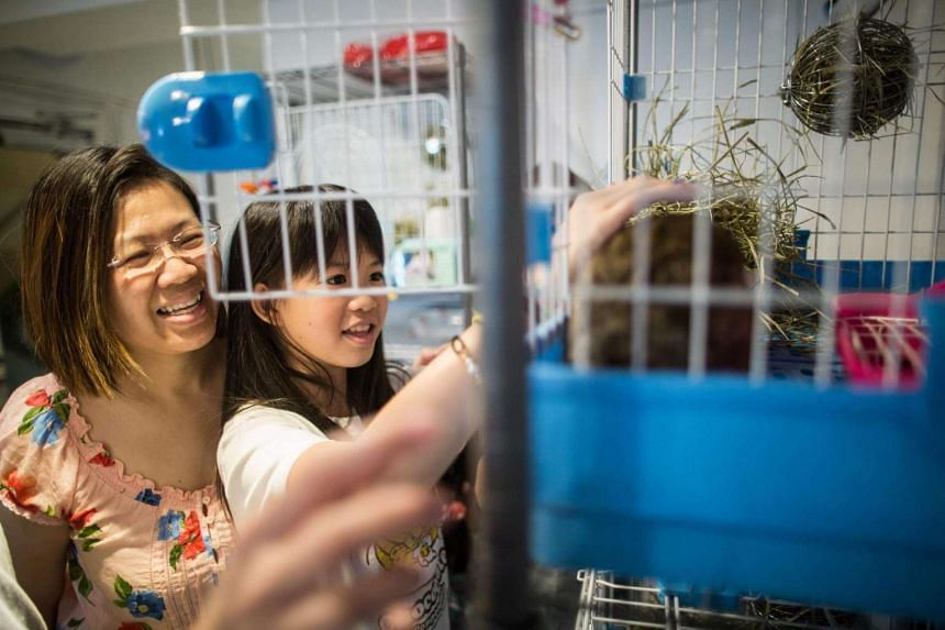 Natalie Chan, 11, strokes a rabbit as her mother smiles whilst visiting the Rabbitland cafe in the district of Causeway Bay in Hong Kong.