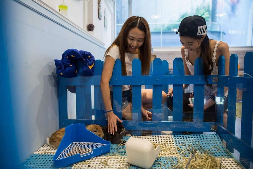 A customer strokes a rabbit as her friend smiles whilst visiting the Rabbitland cafe in the district of Causeway Bay in Hong Kong.