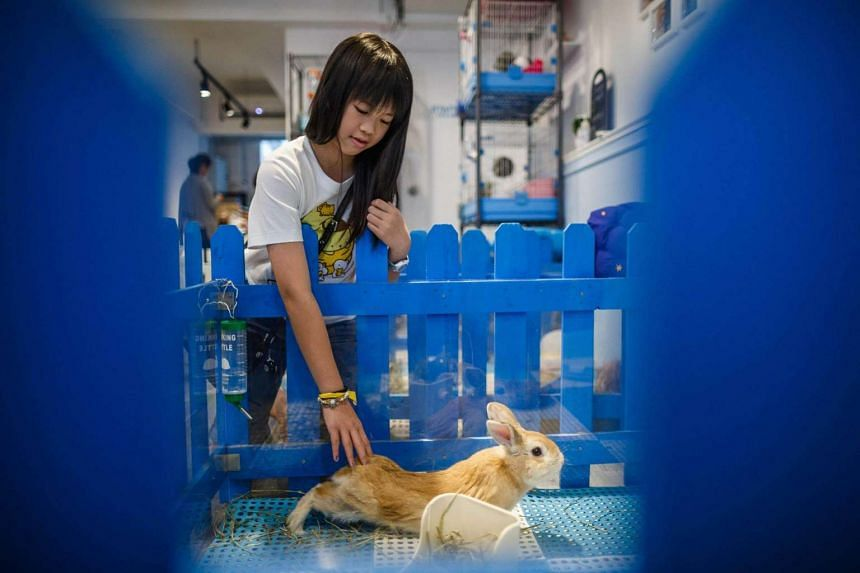 Natalie Chan, 11, strokes a rabbit at the Rabbitland cafe in the district of Causeway Bay in Hong Kong.