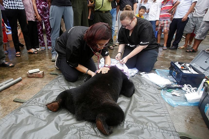 Veterinarians from the Animals Asia Foundation checking the health of a sun bear after rescuing it from a family in Nam Dinh province, Vietnam, on Thursday. The animal rights organisation said it will take the bear, which had been bought as a pet sev