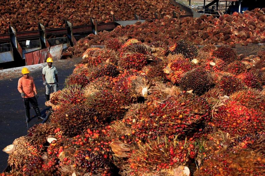 Workers stand near palm oil fruits inside a palm oil factory in Sepang, outside Kuala Lumpur, Feb 18, 2014.