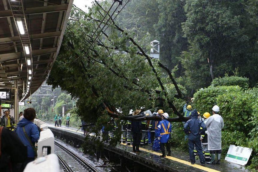 A fallen tree blocking a railway station in Tokyo.