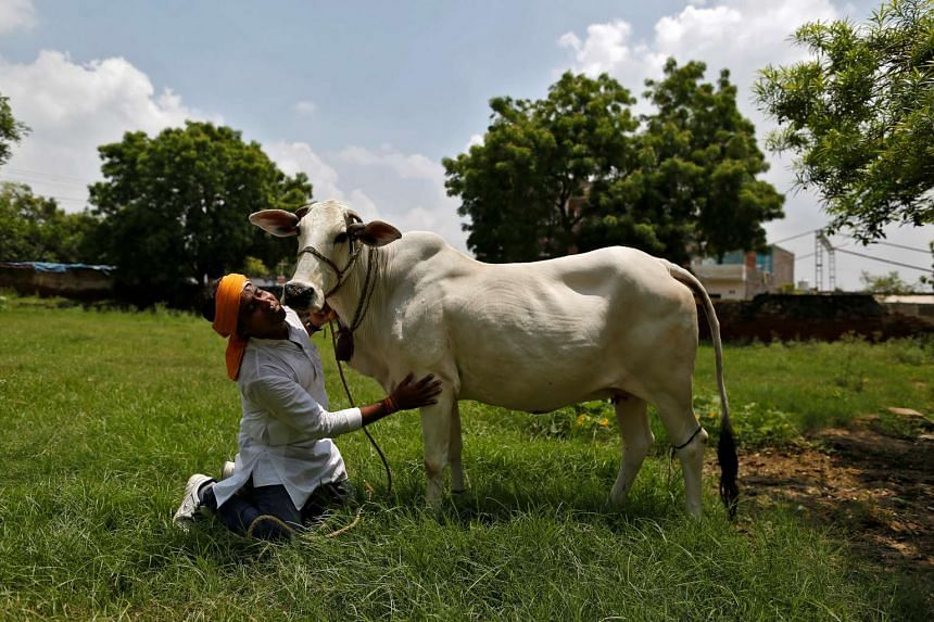 Police in central India are sticking glow-in-the-dark strips on the horns of stray cattle.