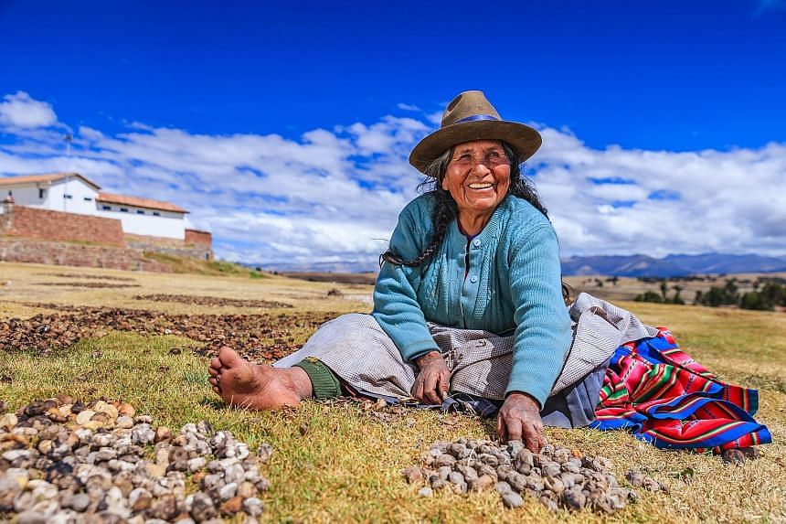 A woman in Peru preparing chuno, the freeze-dried potato that can be stored and eaten for a decade.