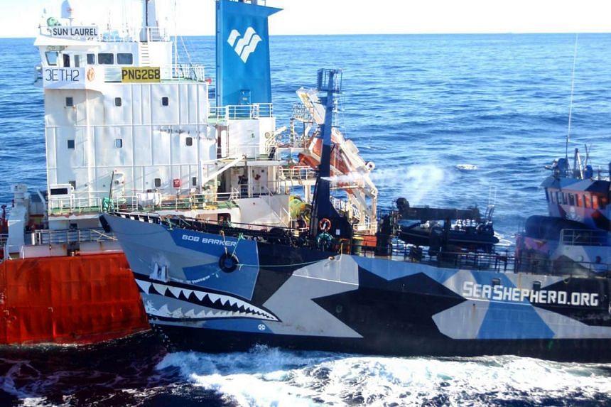Sea Shepherd ship Bob Barker (right) colliding with the Japanese whaling fleet fuel tanker the Sun Laurel on Feb 23, 2013.