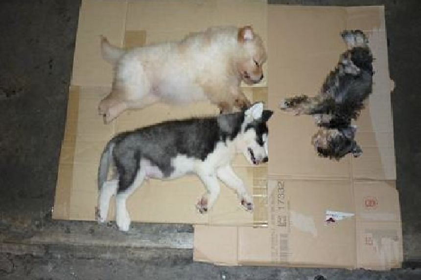 The three puppies were found crammed into a speaker box in the car.