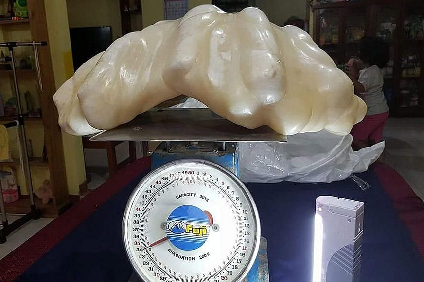 An undated photo provided by the Puerto Princesa Tourism Office shows the pearl tipping the scales at 34kg. It was found 10 years ago by a fisherman, who did not know it was worth millions.