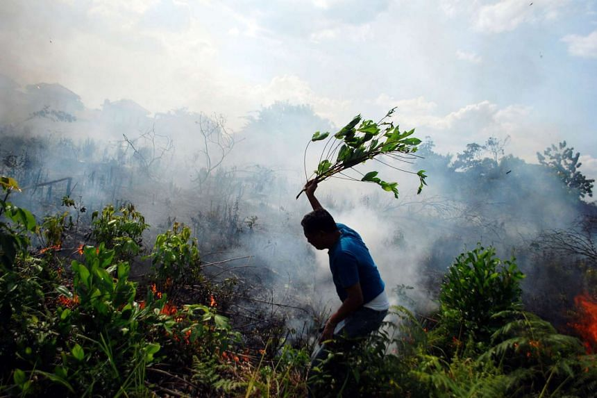 A resident tries to put out a bush fire with a tree branch in Pekanbaru, Riau, Sumatra island, Indonesia on Aug 23, 2016.