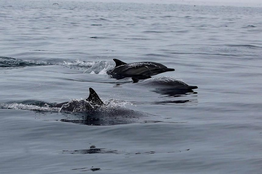 The US government is seeking a ban on swimming with Hawaii's spinner dolphins.