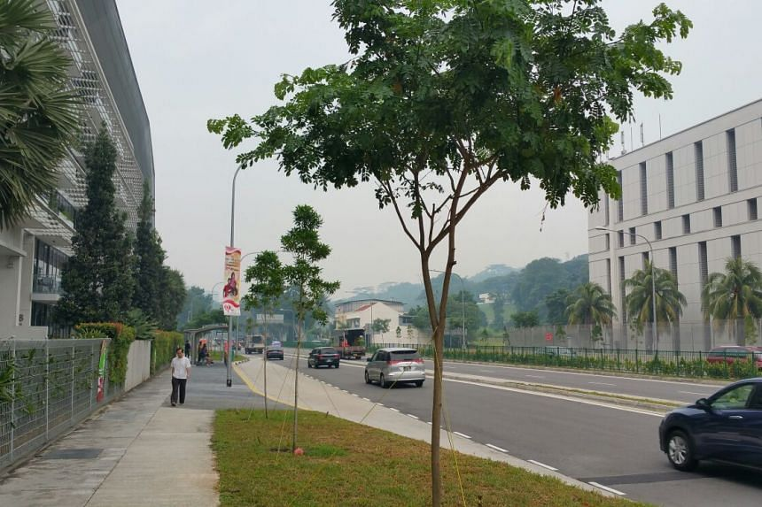 The hazy skyline seen at Upper Bukit Timah Road at about 8.30am on Friday morning.