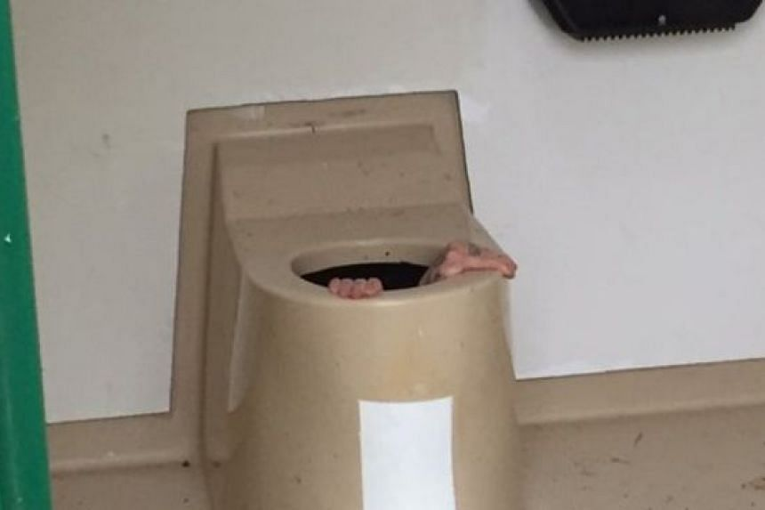 Cato Berntsen Larsen, 20, was unable to climb back out of the toilet again.