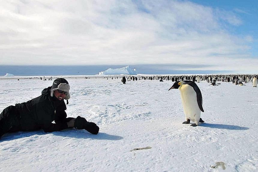 Visitors can get up close to penguins (above) or trek below an icefall.
