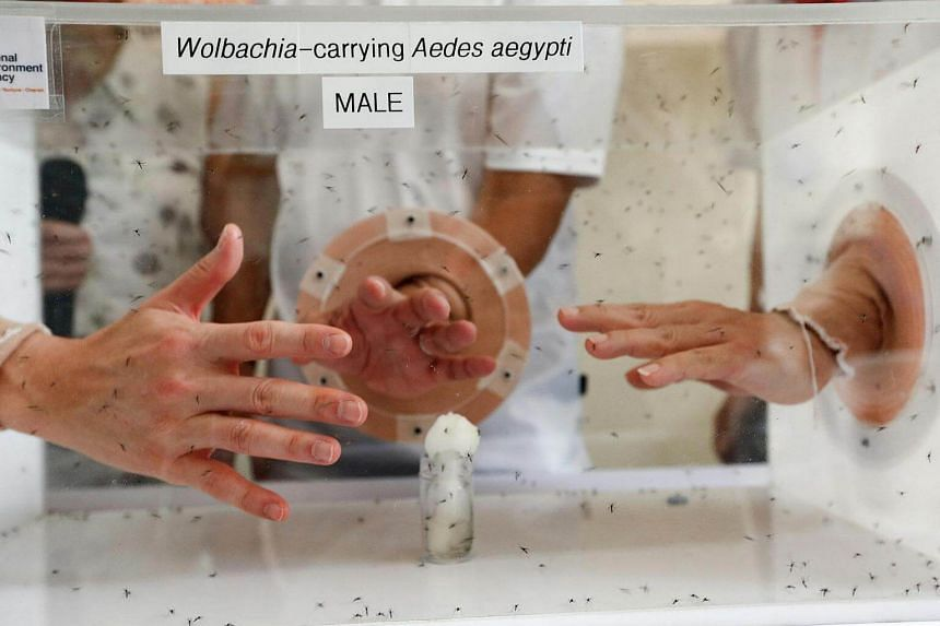Hands being placed in a box of Wolbachia-carrying mosquitoes to demonstrate that they do not bite.