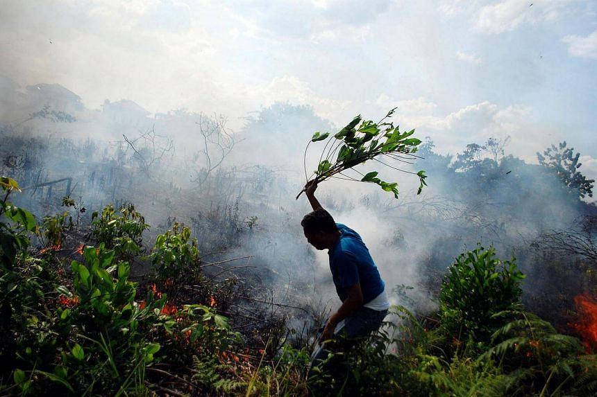 A resident tries to put out a bushfire with a tree branch in Pekanbaru, Riau, on Sumatra island on Aug 23.