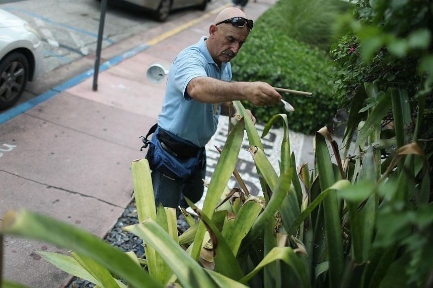 A mosquito control inspector using larvicide granules on plants where water has pooled and mosquitoes were breeding on a property in the Miami Beach neighborhood on August 24 in Miami Beach, Florida.