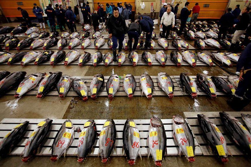 Wholesalers survey fresh tuna at Tokyo's Tsukiji fish market before the New Year's auction in 2013.
