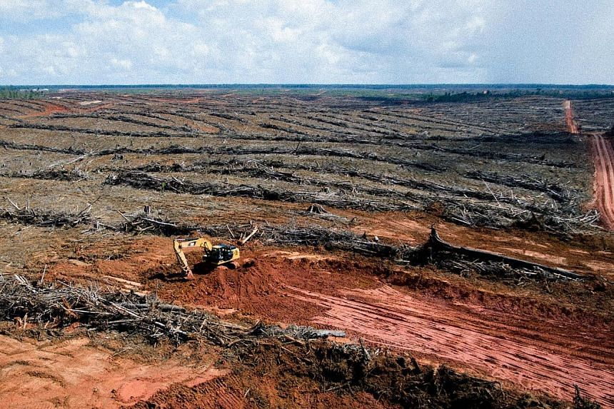 """Using aerial photographs and other data, investigators say """"no less than 894 fire hot spots"""" were detected in Korindo's oil palm concessions"""