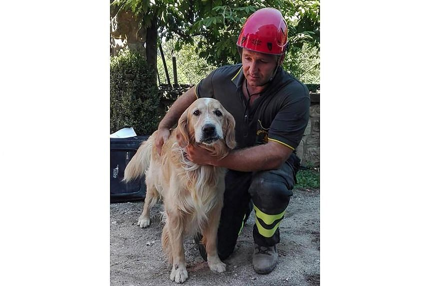 Romeo, the dog golden retriever pulled alive from the rubble of a collapsed house on Sept 2, 2016.
