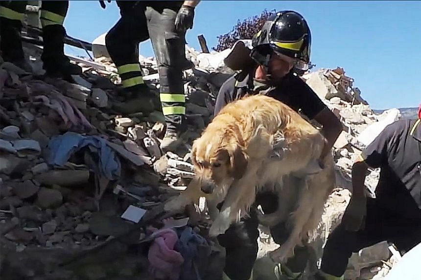 Italian firemen carrying a golden retriever named Romeo after it was pulled from the rubble of a house in the tiny village of San Lorenzo a Flaviano on Sept 2, more than nine days after Italy's devastating earthquake on Aug 24. The image was taken fr