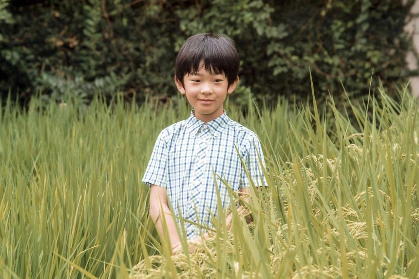 Japan's Prince Hisahito in a rice field of the Akasaka Detached Palace in Tokyo, Japan on Sept 6, 2016.