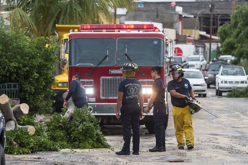 Firefighters cut the trunk of a fallen tree in the aftermath of Hurricane Newton in Los Cabos, Mexico, Sept 6, 2016.