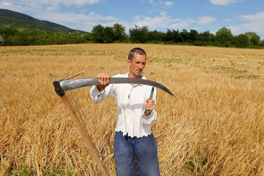 A man sharpens his scythe during a harvest festival in Hosszuheteny, Hungary in July (2016). REUTERS/Laszlo Balogh  Copyright: REUTERS