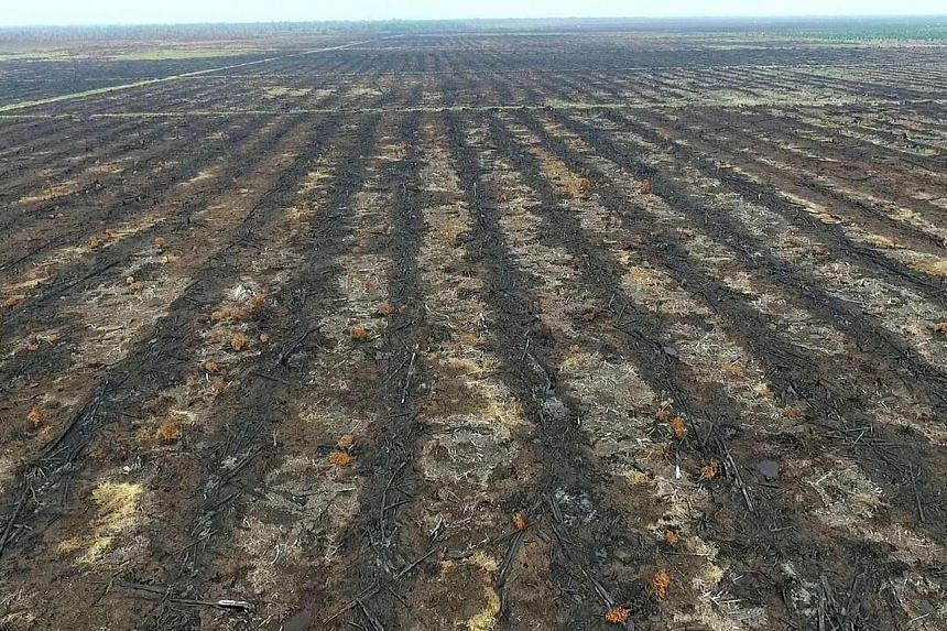 A burnt-out plantation in Riau province. The fatwa against forest burning comes after officials in Riau were prevented by local residents from investigating farming violations.