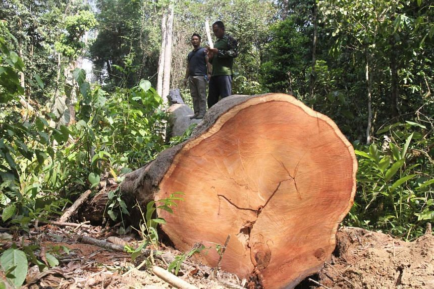 Logging done in a forest close to an Indonesia village in East Aceh.