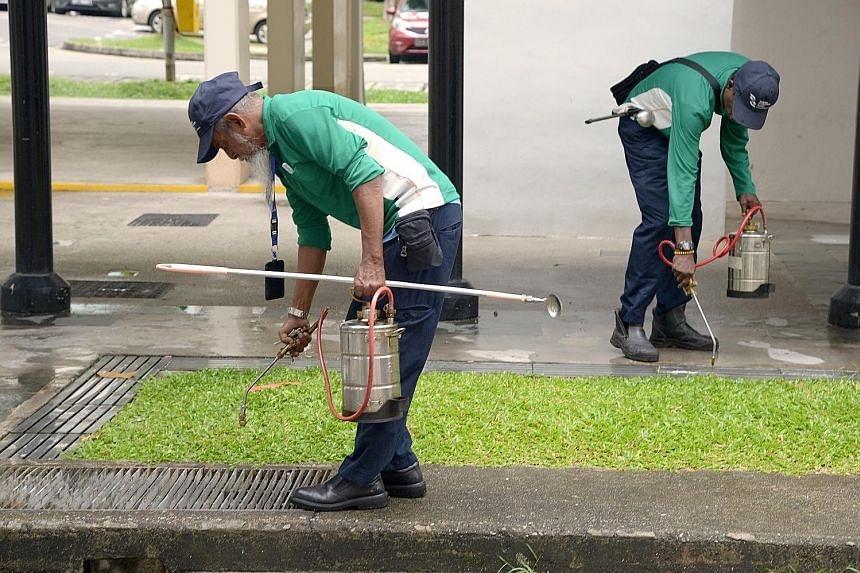 National Environment Agency officers pouring oil into drains. Most of the Aedes aegypti's breeding habitats, such as gutters and crevices, are small and difficult to locate, making it hard to eradicate the mosquitoes.