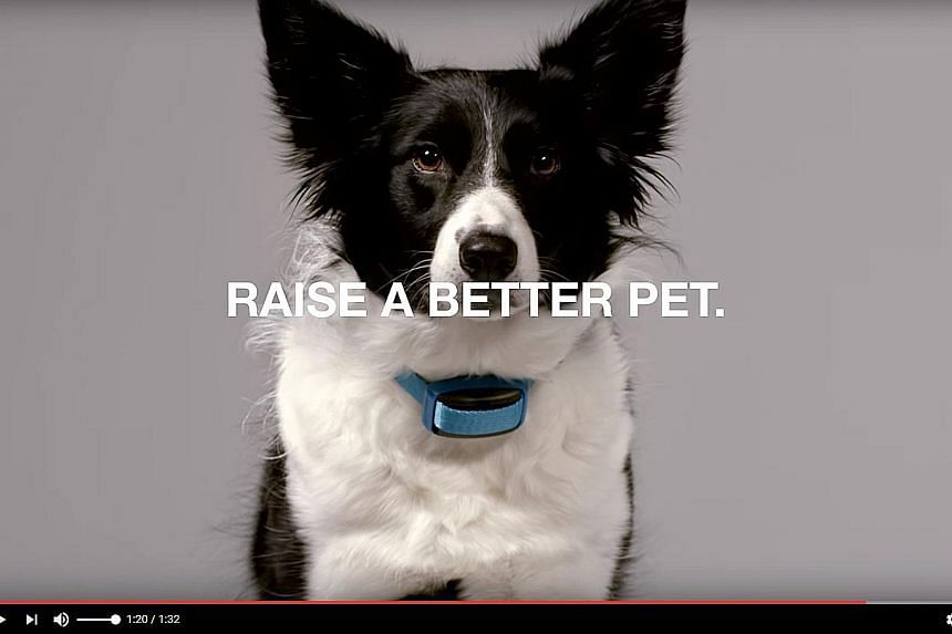 "Garmin has released a device that slips onto a dog collar and can issue ""static"" to deter ""unwanted behaviours"". A video commercial posted on Facebook has drawn flak over the controversial training method."