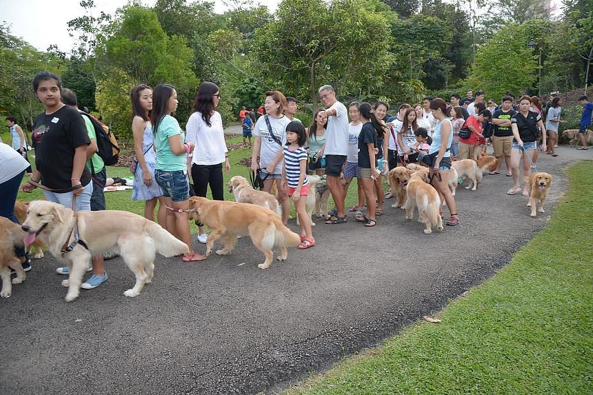 About 100 golden retrievers and their owners turned out in full force yesterday, forming a snaking queue at the Botanic Gardens as they waited for their turn to meet Isaac.