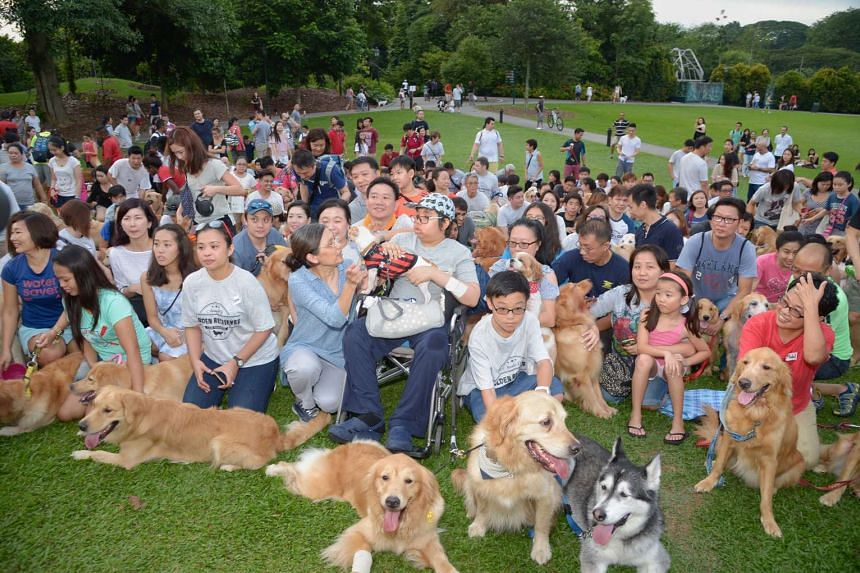 Isaac enjoyed a 13th birthday party with around 100 golden retrievers at the Botanic Gardens.