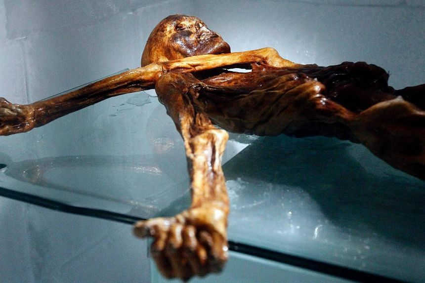 This file photo taken on Feb 28, 2011 shows the mummy of an iceman named Oetzi, discovered in Sept 1991.