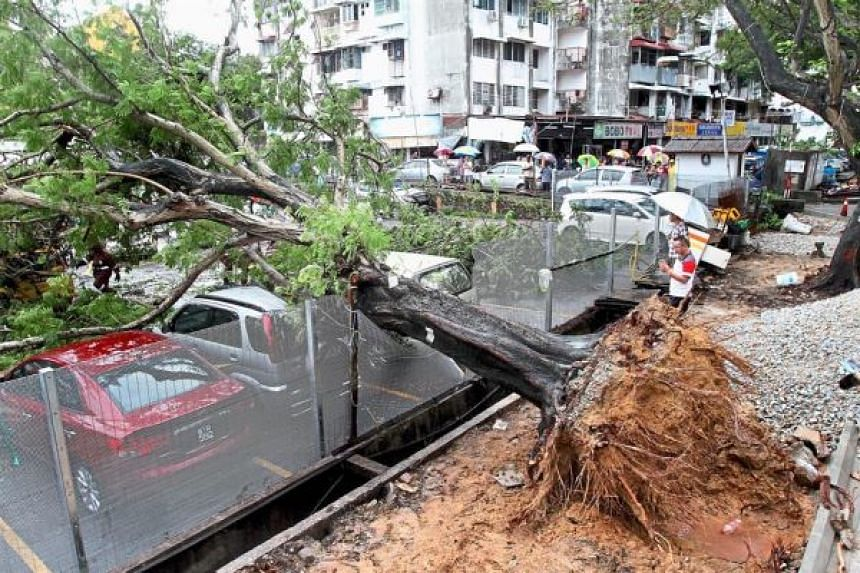 An uprooted tree which fell on five cars after heavy rains in Penang.