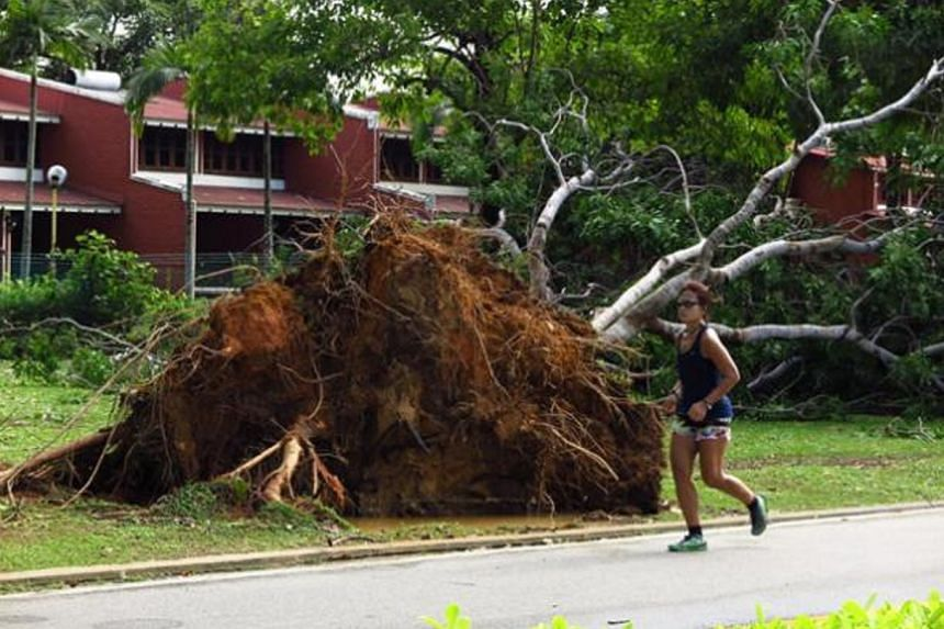 On Sunday (Sept 18), a number of trees were uprooted at East Coast Park.