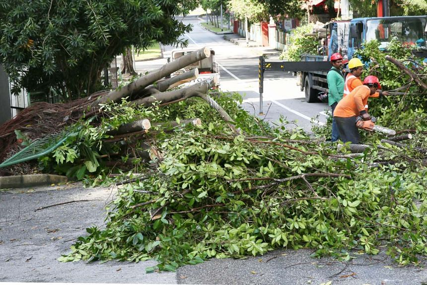 Workers clearing a tree at Alexandra Terrace after it fell following storms, on Sept 18, 2016.