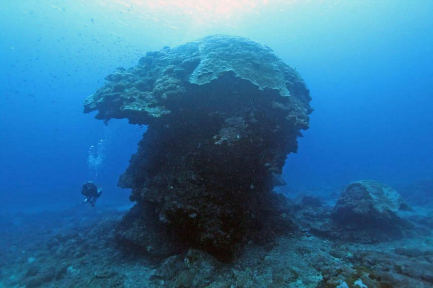 A diver under the 10m high mushroom-shaped pore coral in the water near Green Island, Taiwan.