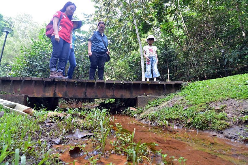 At this nameless stream at Bukit Batok Nature Park, you can see fishes, dragonflies and tadpoles in the water.