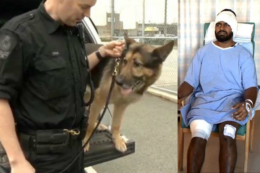 (Left picture) A dog used during operations by Canadian police. On the right is Mr Vicknesh Supramaniam during an interview with Canadian news outlet Global News.