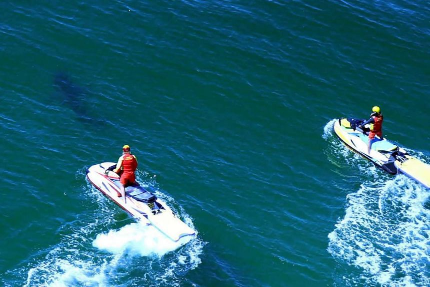 This hand out photo released by New South Wales Department of Primary Industries on Sept 26, 2016, shows life savers chasing a shark off the Ballina's popular Lighthouse Beach following a shark attack that injured a 17-year-old surfer.