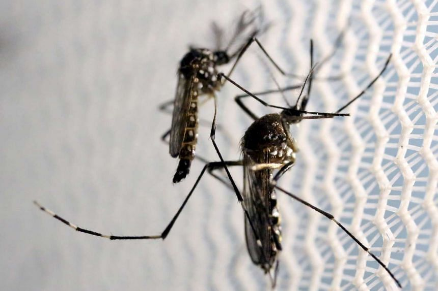 The Philippines has reported its first known case of a pregnant woman infected with the Zika virus.