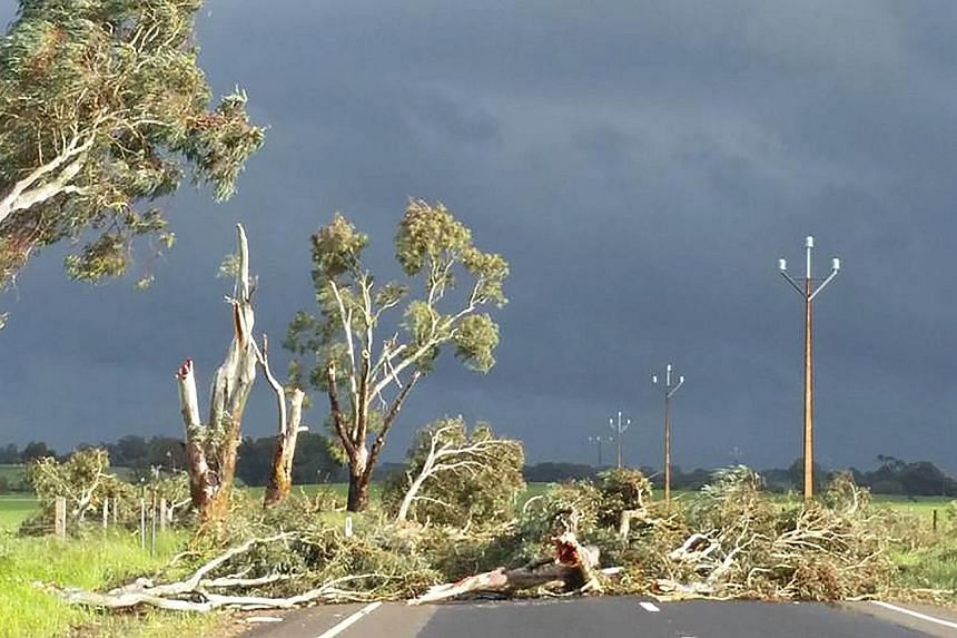 Trees toppled by high winds near the town of Melrose in South Australia. The state was lashed by severe storms on Wednesday that knocked over transmission towers, triggering a total blackout.